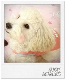 ハルちゃん犬服ご着用写真
