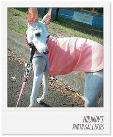 ニーナちゃん 犬服 ご着用 画像