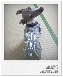 海くん 犬の洋服 イタグレ写真