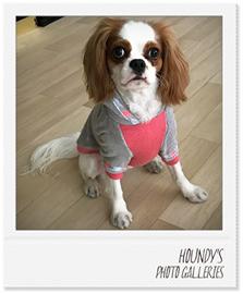ゆずちゃん キャバリア パーカー犬服 画像
