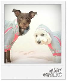 ハルちゃん&ブルーちゃん犬服ご着用