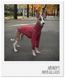 オリーブちゃん イタリアングレーハウンド犬服