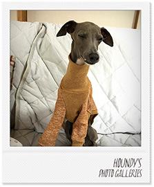 そら君 Tシャツ 名入れ 犬服