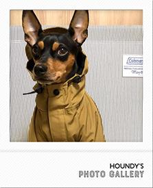 チワワ ミニピン マウンテンジャケット 犬 服
