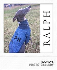 名前入り犬服 Tシャツ ラルフくん
