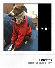 マウンテンジャケット Yuuちゃん 犬服 写真 イタリアン グレーハウンド