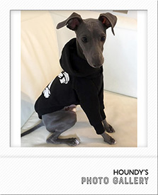 イタリアングレーハウンド パーカー 名前入り 犬服 写真