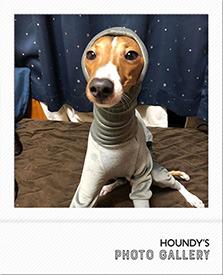 ロンパース 犬 Italian Greyhound