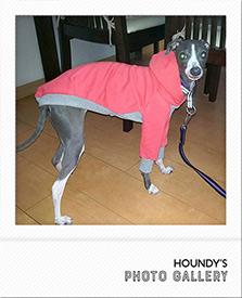 パーカー Italian Greyhound サラちゃん