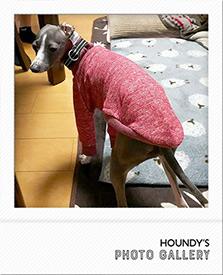 Tシャツ イタグレ Italian Greyhound