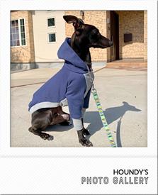 イタリアングレーハウンド パーカー ジーノくん 犬服ご着用