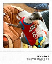 イタグレ服 名前入りタンク おとちゃん写真 犬服