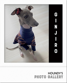 イタグレ Tシャツ 銀治郎 7分袖 写真 犬服