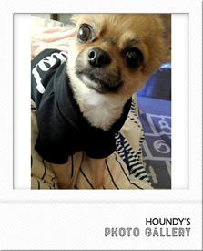 チワワ キングくん 写真 犬服
