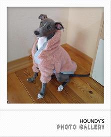 イタリアングレイハウンド フーディ 犬服 うりちゃん 画像
