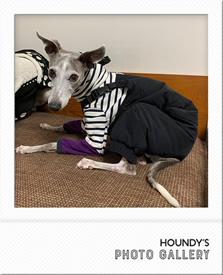 イタリアングレーハウンド服 灰次くん ダウンパンツ 暖かい 犬のズボン