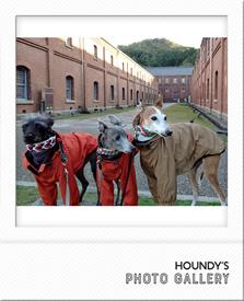 イタリアングレーハウンド マウンテンパーカー 犬服 お揃い