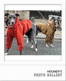イタリアングレーハウンド服 マウンテンジャケット お揃い アウトドア犬