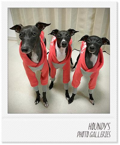 イタリアングレーハウンド パーカー 犬 服